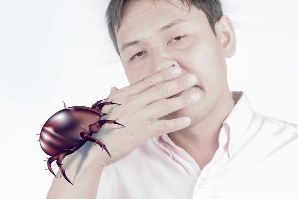 Allergies aux acariens : quelles sont les précautions à prendre ?