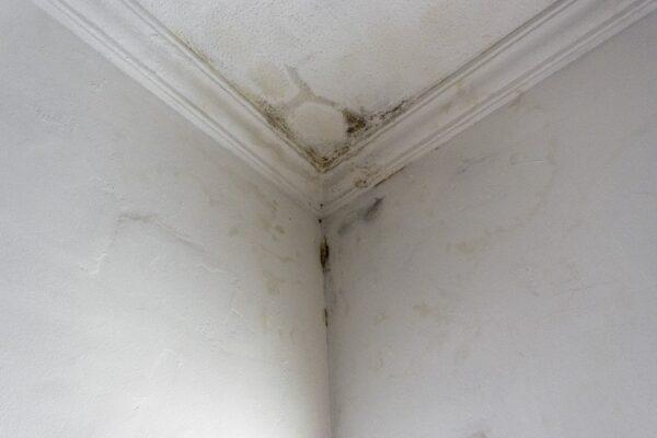 Les astuces pratiques pour mettre fin à l'infiltration d'eau dans le mur
